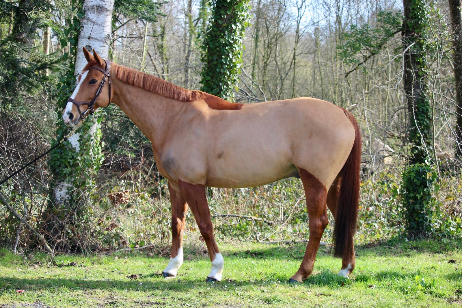 Calypso de Fontenay